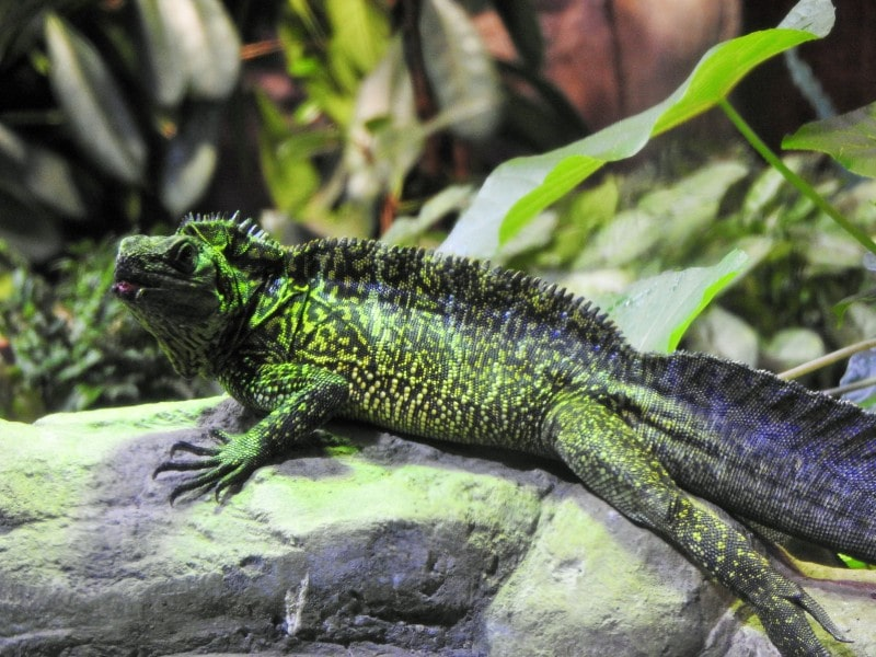 Lizard at Moskvarium