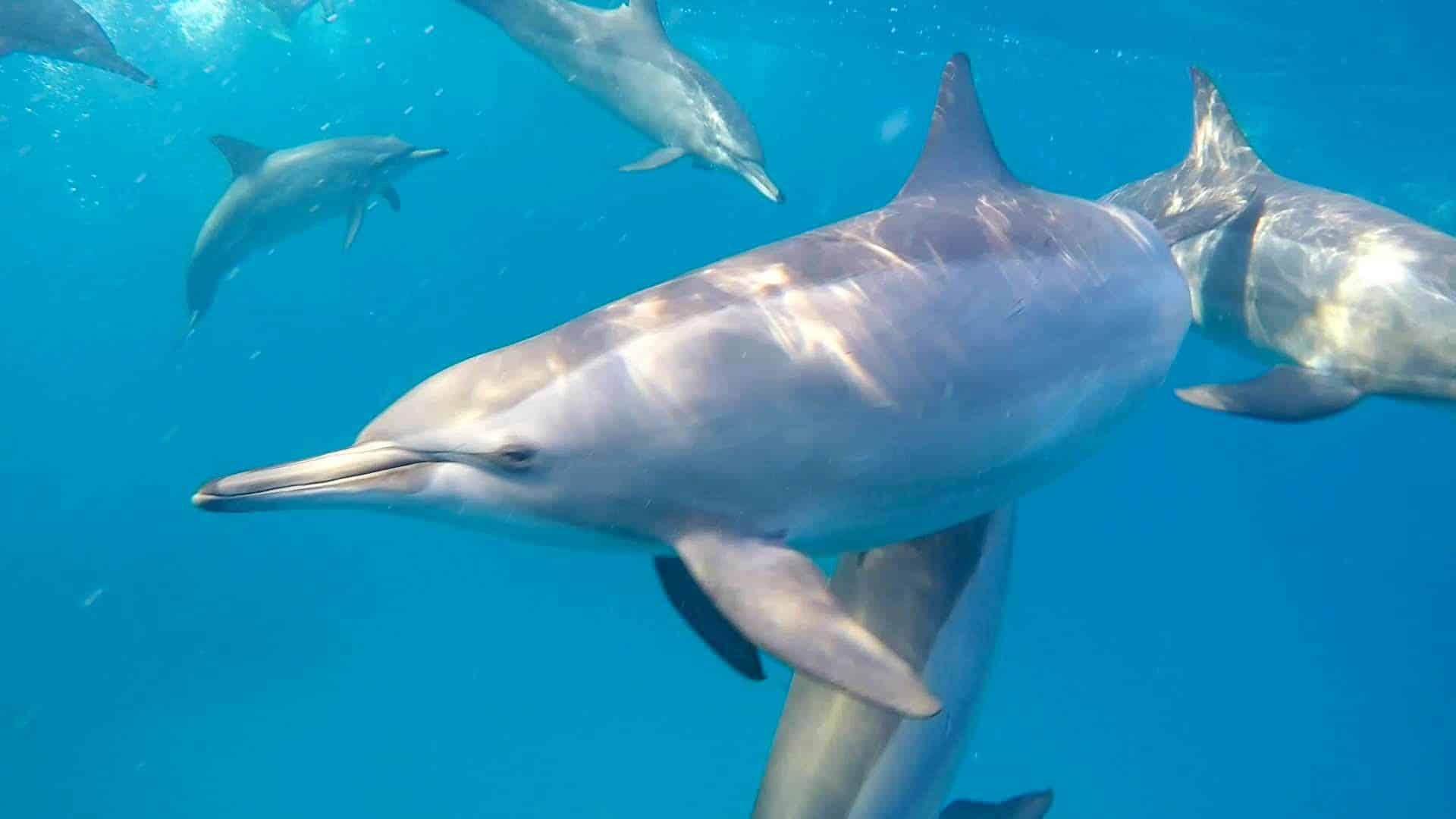 dolphin experience sataya reef